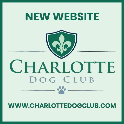 Charlotte nc goldendoodle puppies